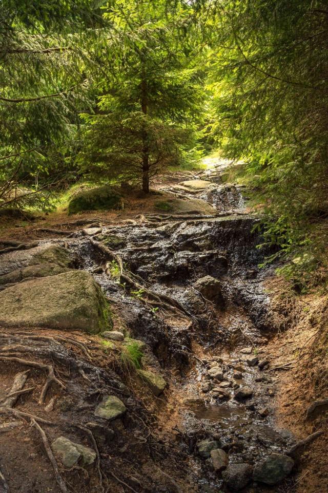 Waldweg-Wanderung