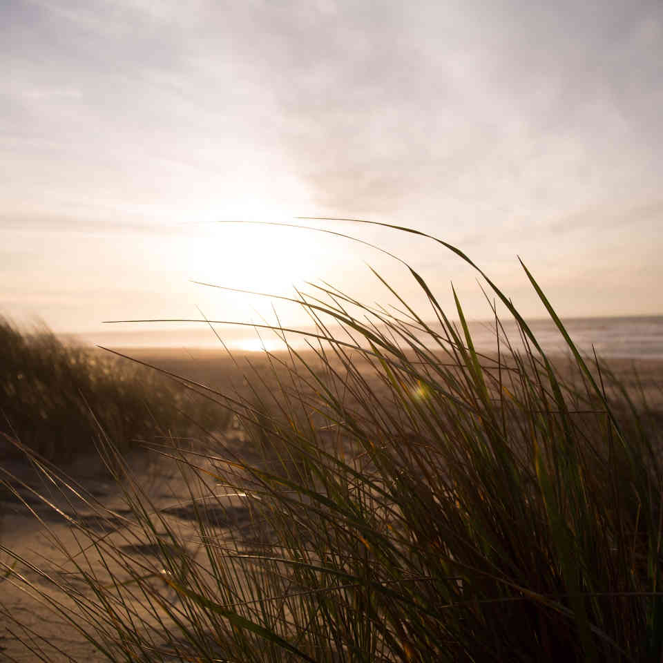 Dünenlandschaft-am-Meer-mit-Gräsern