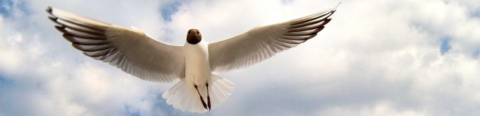 Möwe im Flug - Strand Prerow - ankofoto