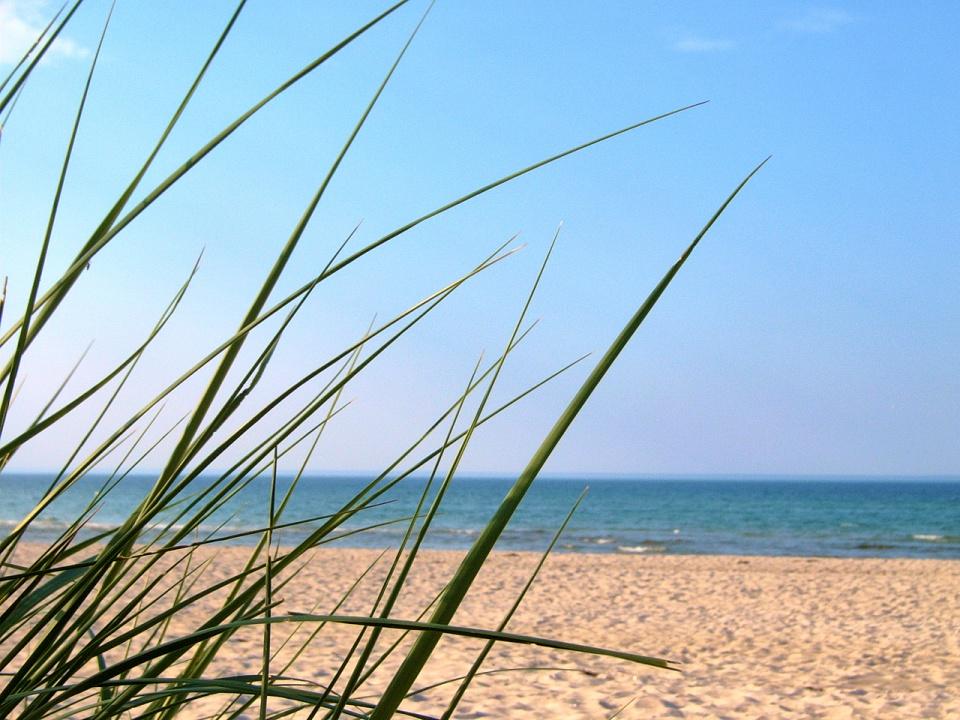 Dünengras - Strand Prerow - ankofoto